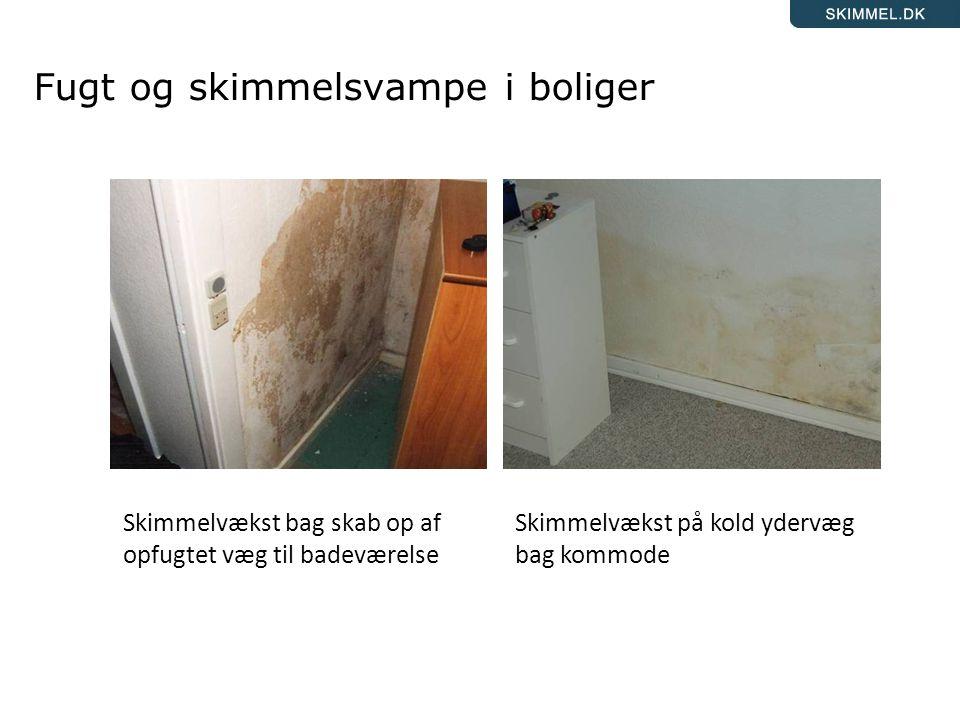 Fugt og skimmelsvampe i boliger