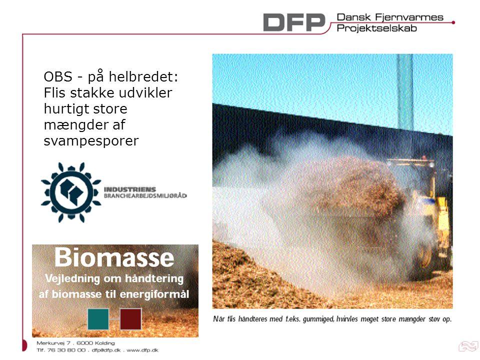 OBS - på helbredet: Flis stakke udvikler hurtigt store mængder af svampesporer