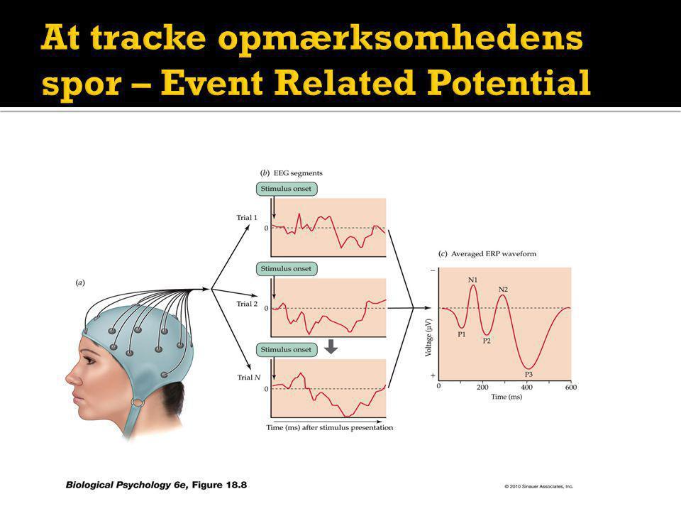 At tracke opmærksomhedens spor – Event Related Potential