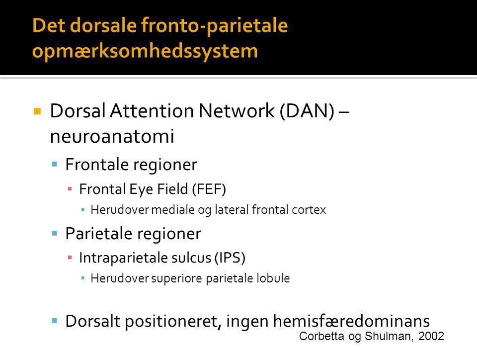 Det dorsale fronto-parietale opmærksomhedssystem