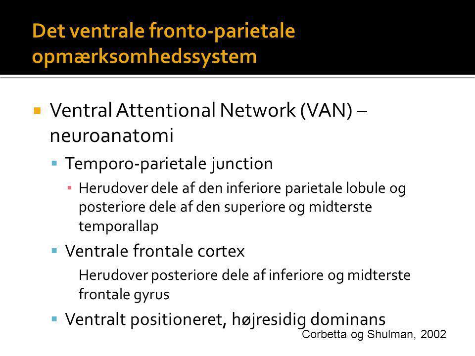 Det ventrale fronto-parietale opmærksomhedssystem