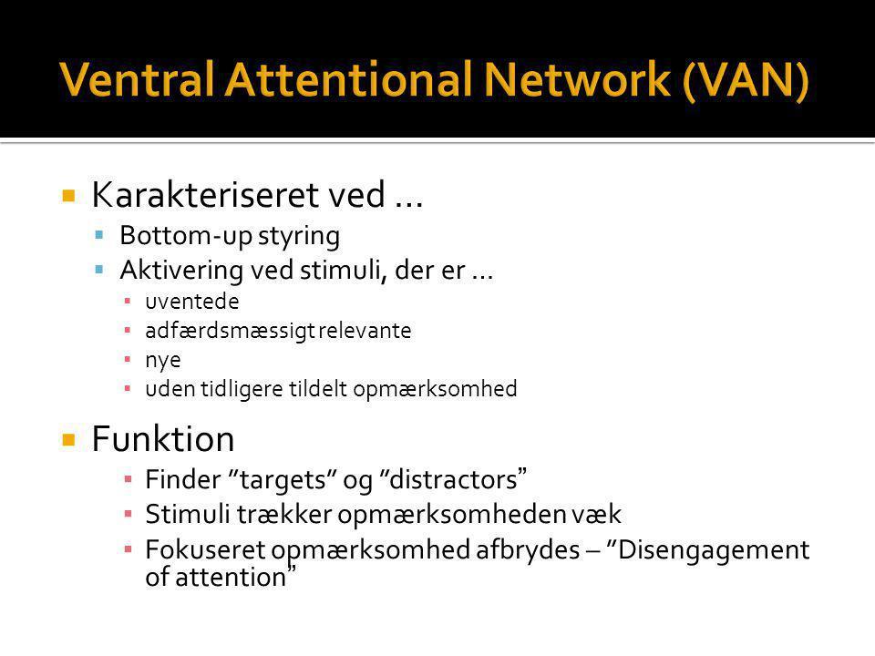 Ventral Attentional Network (VAN)