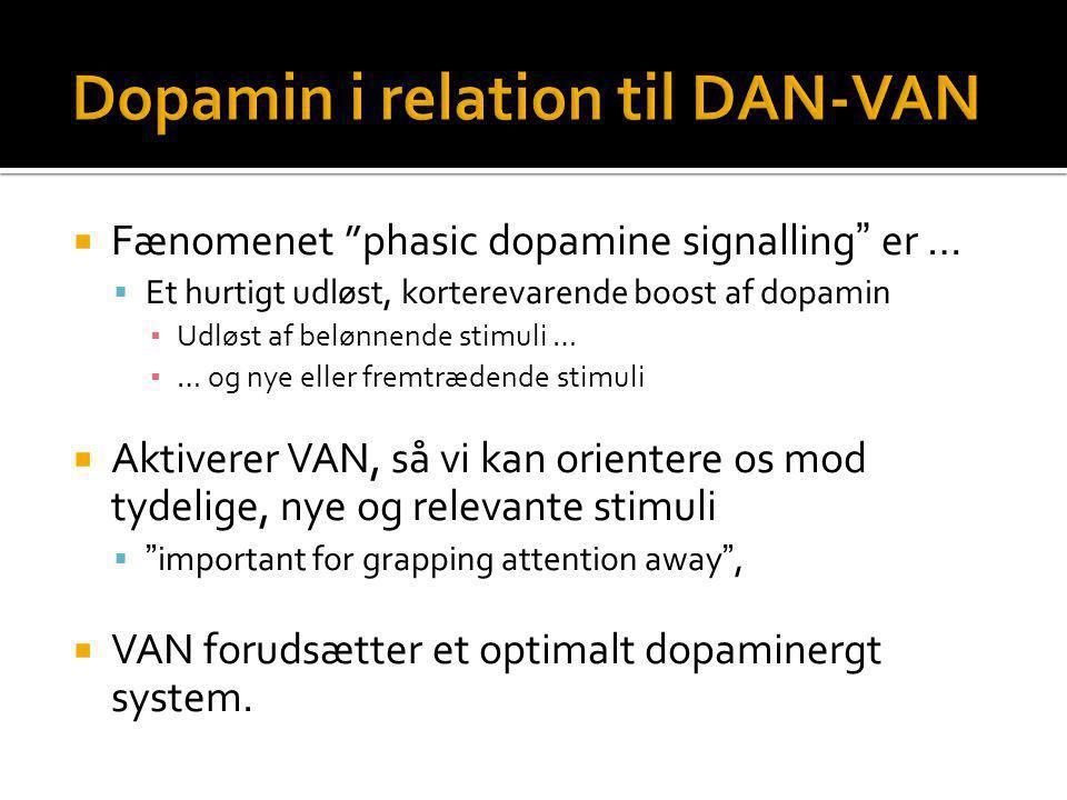 Dopamin i relation til DAN-VAN