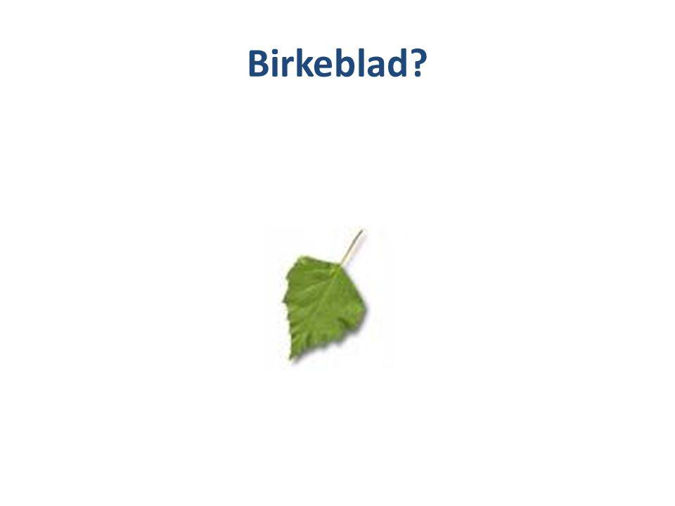 Birkeblad