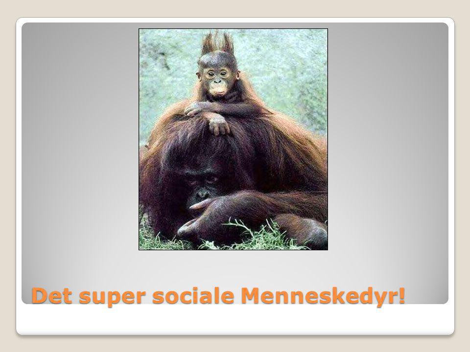 Det super sociale Menneskedyr!