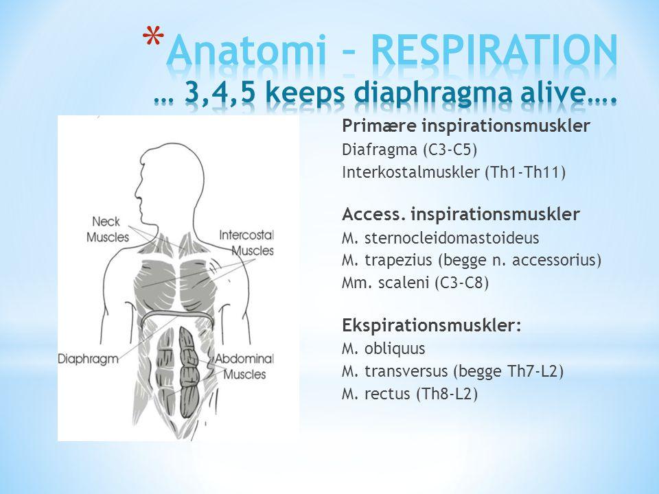 Anatomi – RESPIRATION … 3,4,5 keeps diaphragma alive….