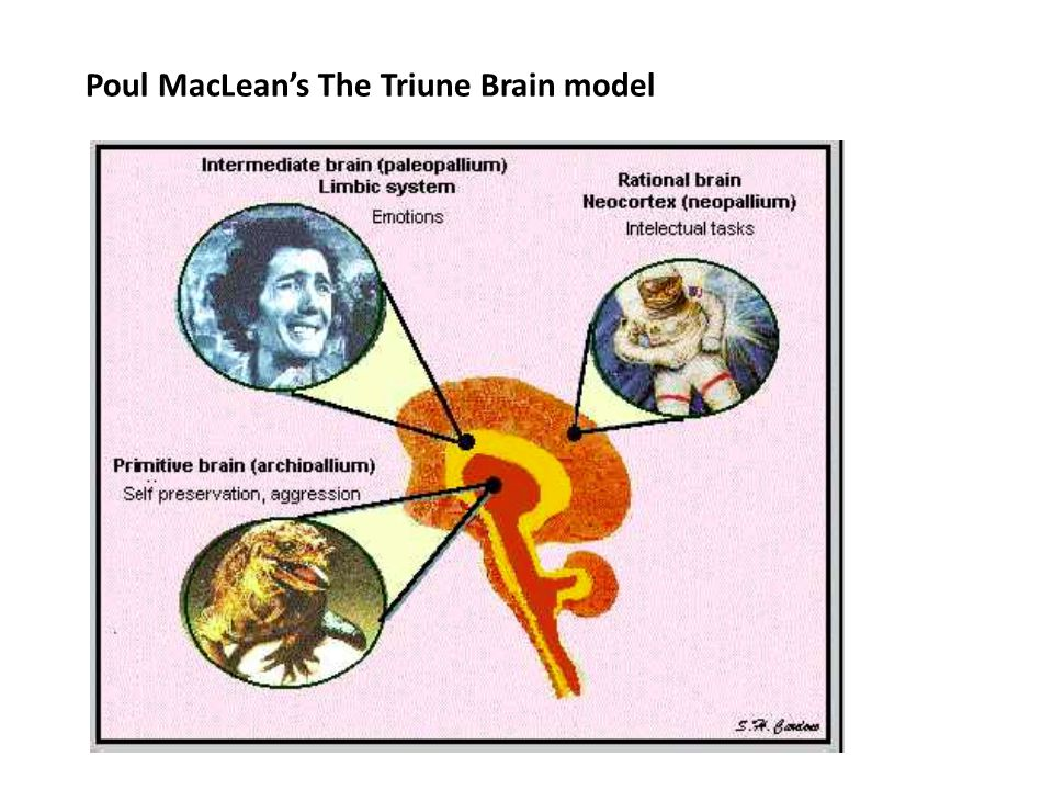 Poul MacLean's The Triune Brain model