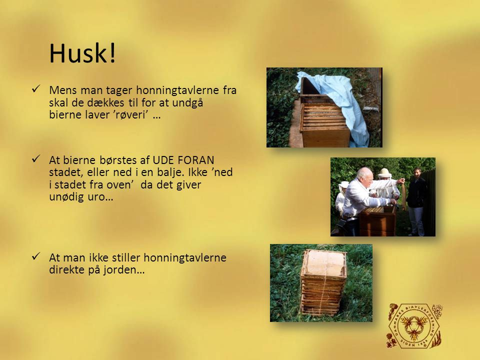 Husk! Mens man tager honningtavlerne fra skal de dækkes til for at undgå bierne laver 'røveri' …
