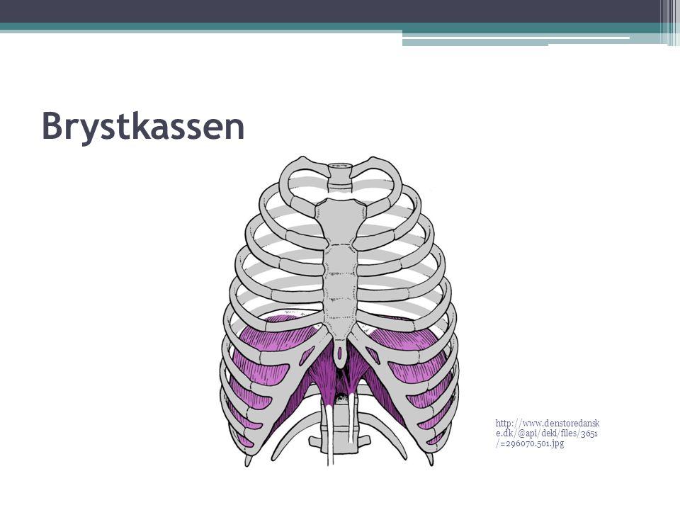 Brystkassen http://www.denstoredanske.dk/@api/deki/files/3651/=296070.501.jpg
