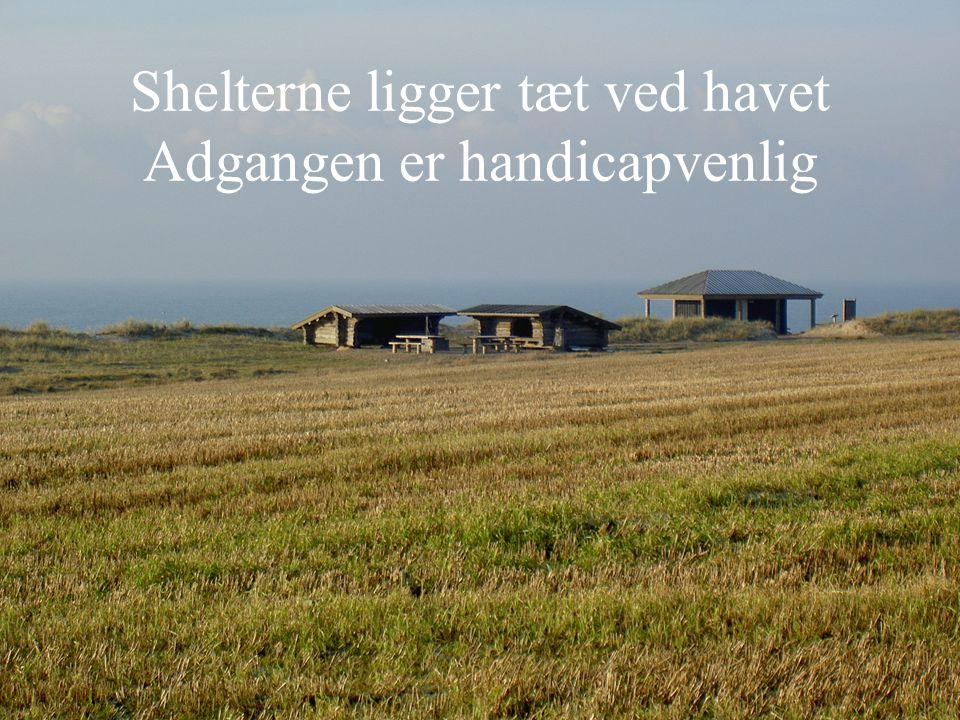 Shelterne ligger tæt ved havet Adgangen er handicapvenlig