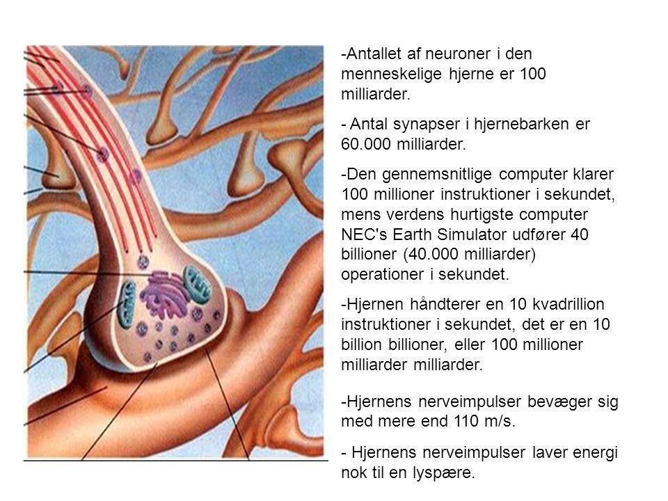 Antallet af neuroner i den menneskelige hjerne er 100 milliarder.