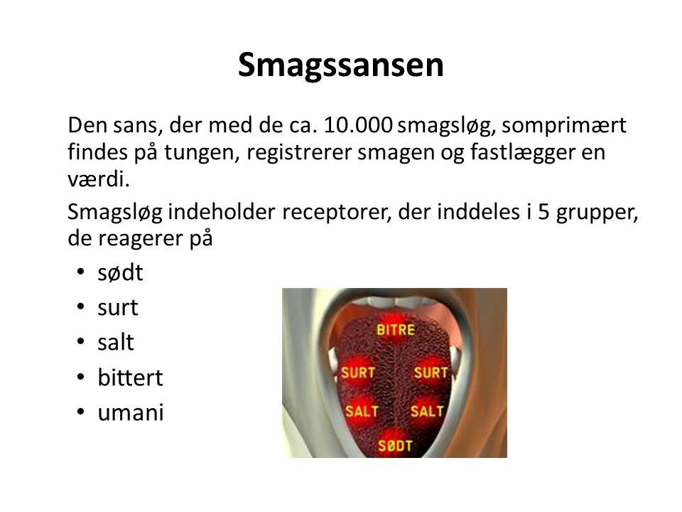 Smagssansen Den sans, der med de ca. 10.000 smagsløg, somprimært findes på tungen, registrerer smagen og fastlægger en værdi.