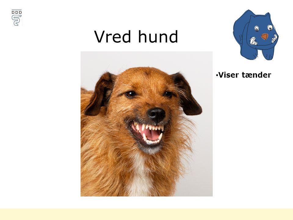 Vred hund Viser tænder