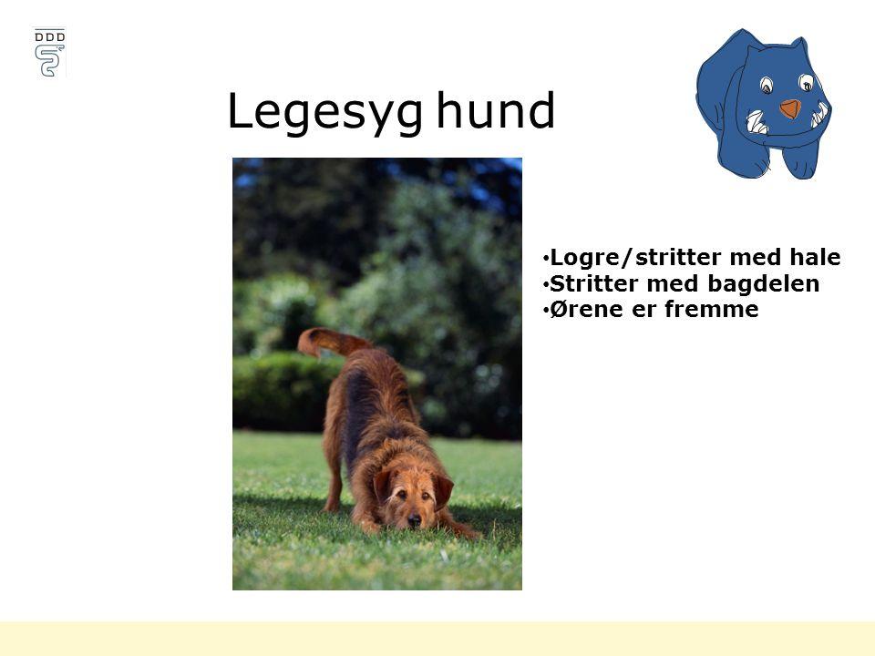 Legesyg hund Logre/stritter med hale Stritter med bagdelen