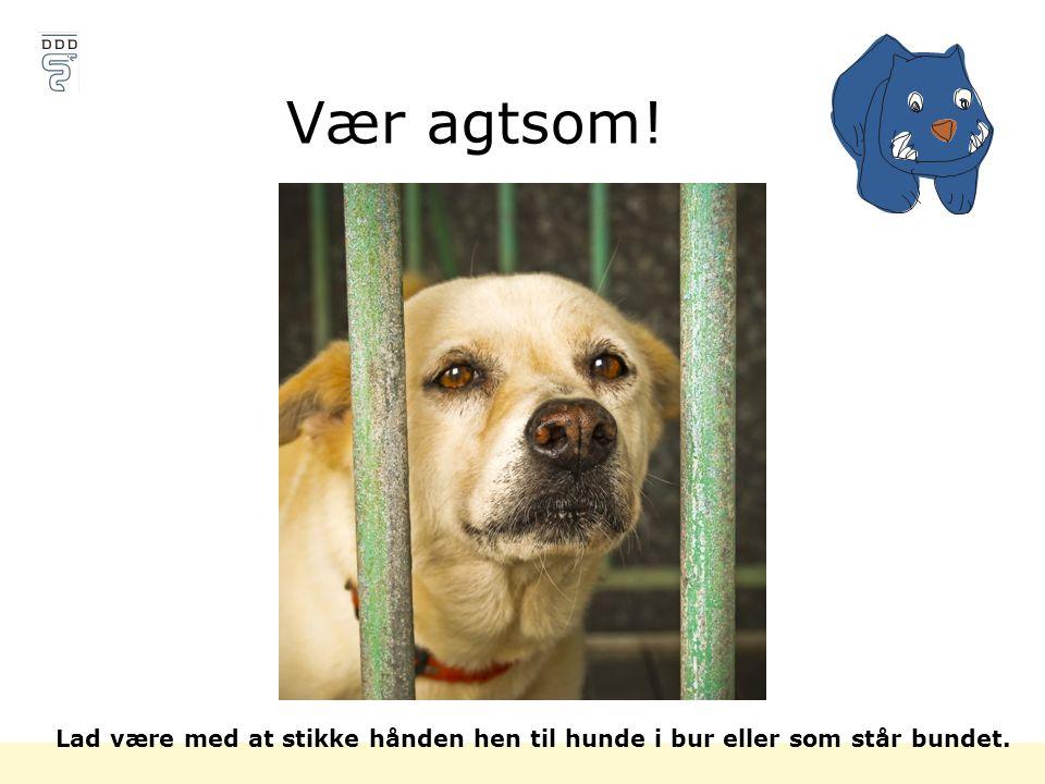 Vær agtsom! Lad være med at stikke hånden hen til hunde i bur eller som står bundet.