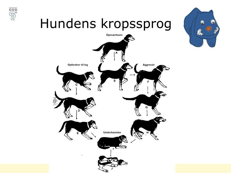 Hundens kropssprog