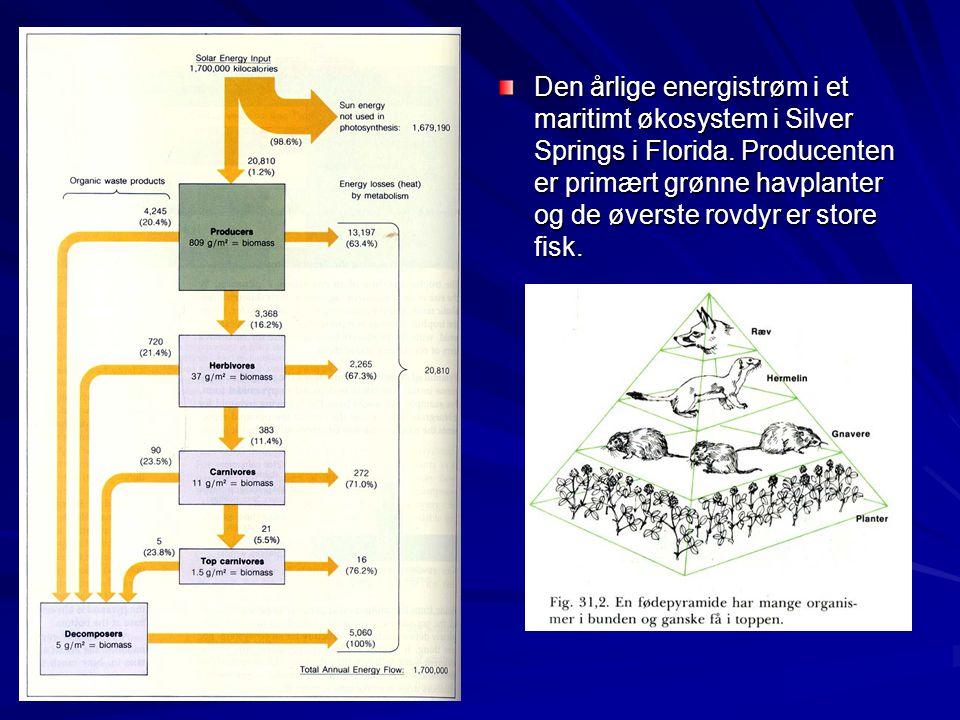 Den årlige energistrøm i et maritimt økosystem i Silver Springs i Florida.