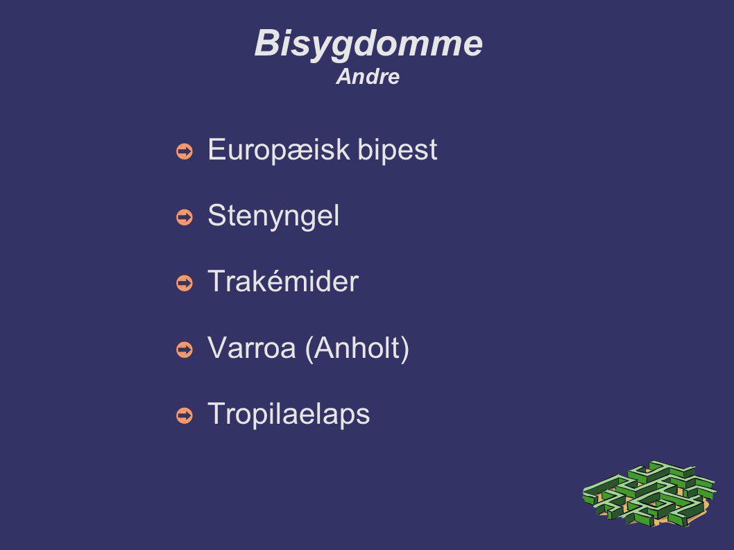 Bisygdomme Andre Europæisk bipest Stenyngel Trakémider Varroa (Anholt)