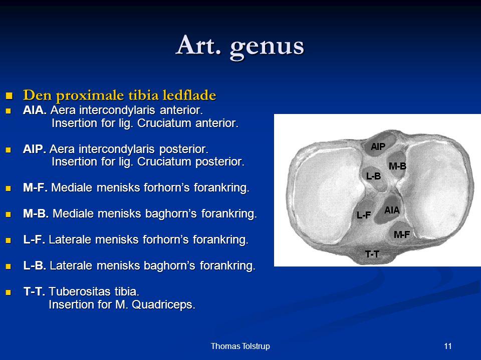Art. genus Den proximale tibia ledflade