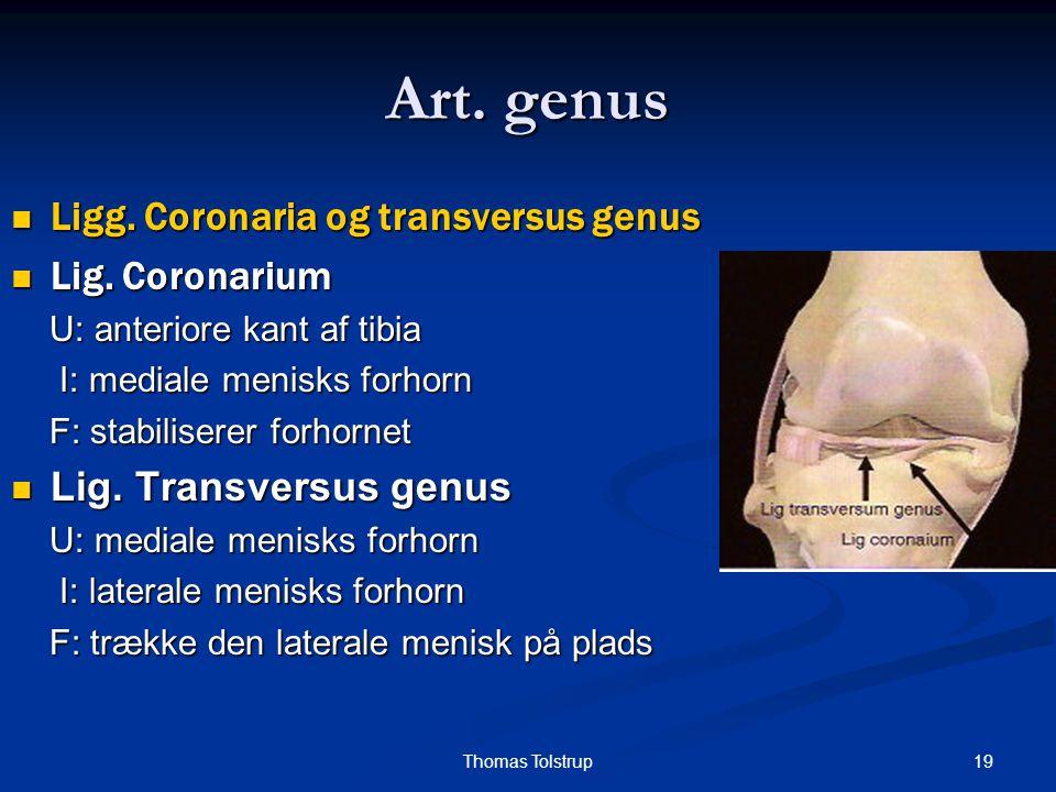 Art. genus Ligg. Coronaria og transversus genus Lig. Coronarium