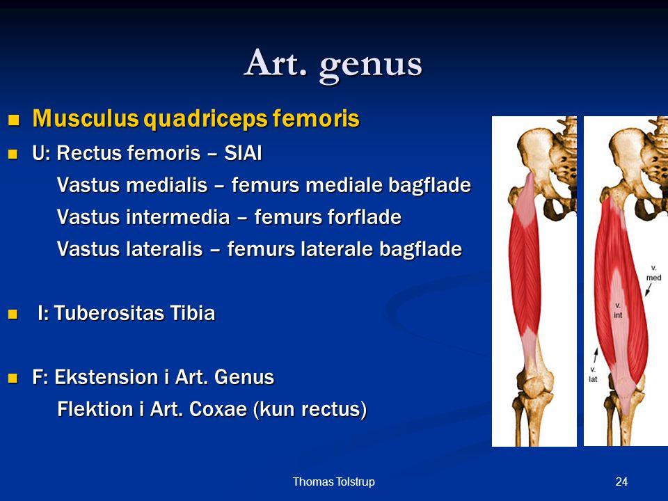 Art. genus Musculus quadriceps femoris U: Rectus femoris – SIAI
