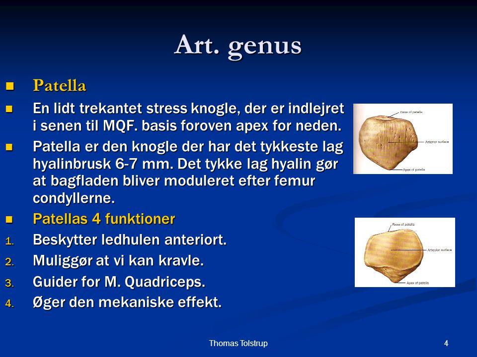 Art. genus Patella. En lidt trekantet stress knogle, der er indlejret i senen til MQF. basis foroven apex for neden.