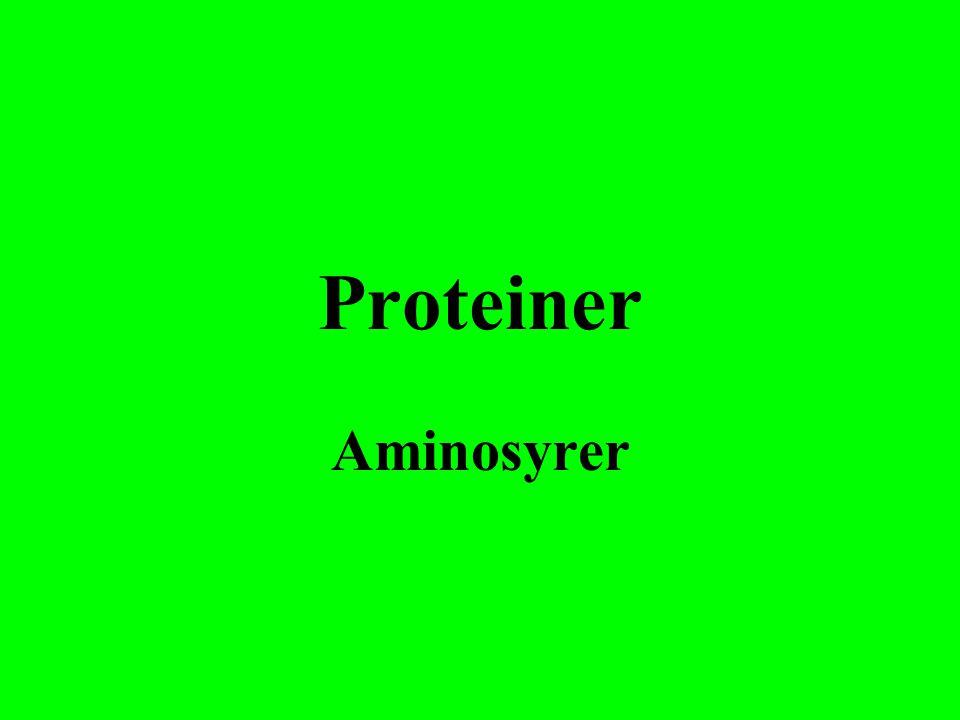 Proteiner Aminosyrer