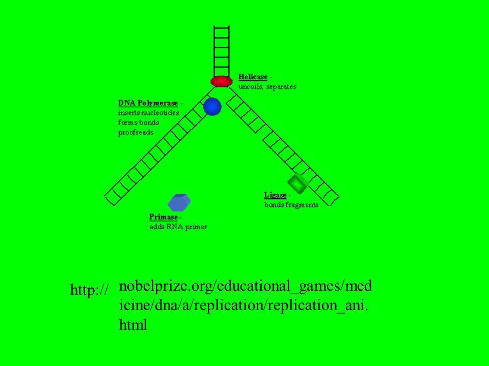 nobelprize.org/educational_games/medicine/dna/a/replication/replication_ani.html http://