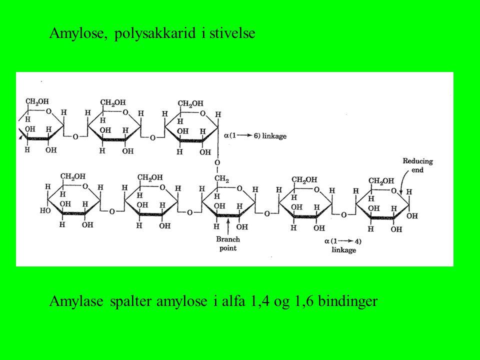 Amylose, polysakkarid i stivelse