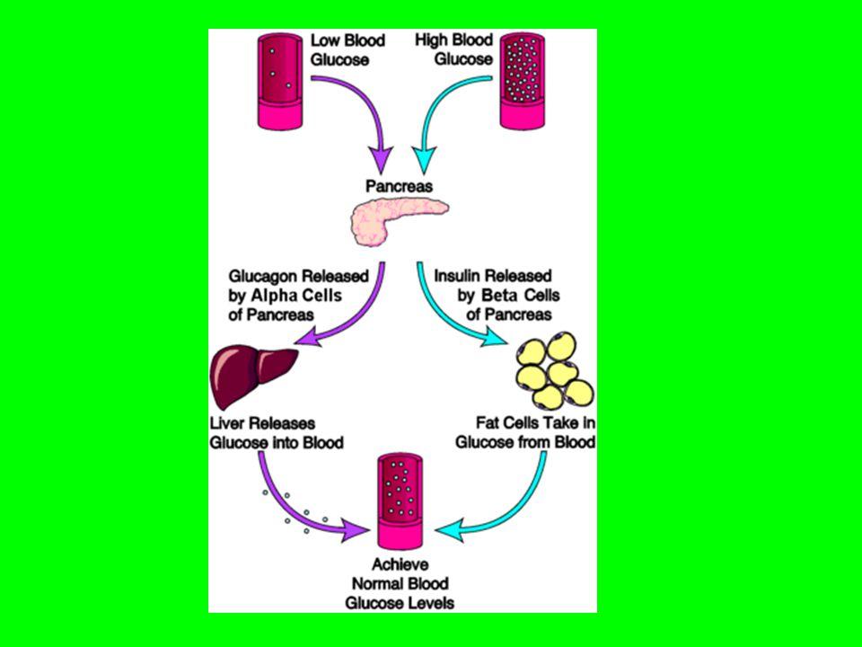 Mekanismerne ved faldende og stigende blodsukkerkoncetnration