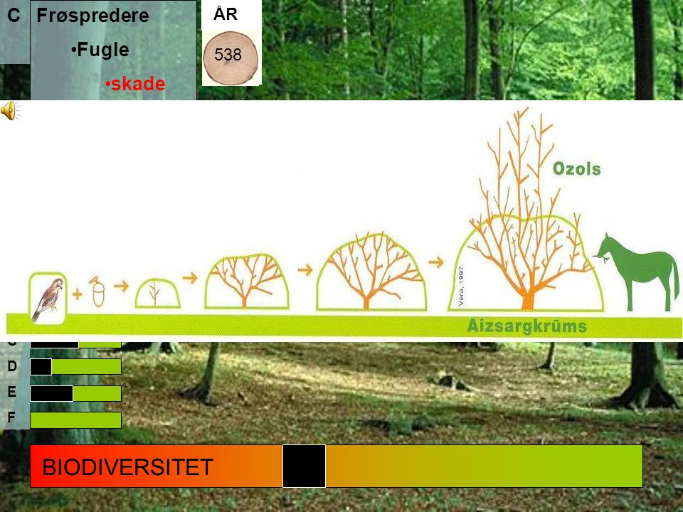 BIODIVERSITET C Frøspredere Fugle skade solsort fasan Gnavere Græssere