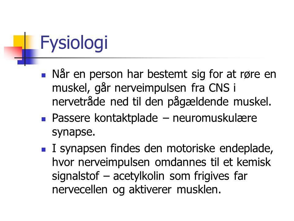 Fysiologi Når en person har bestemt sig for at røre en muskel, går nerveimpulsen fra CNS i nervetråde ned til den pågældende muskel.