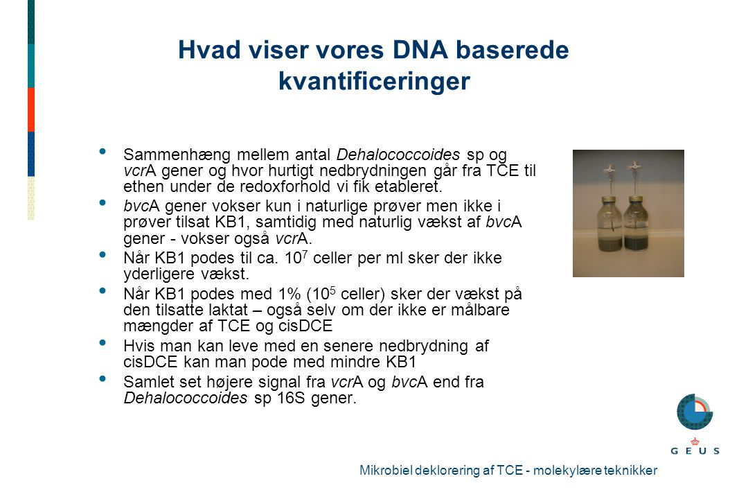 Hvad viser vores DNA baserede kvantificeringer