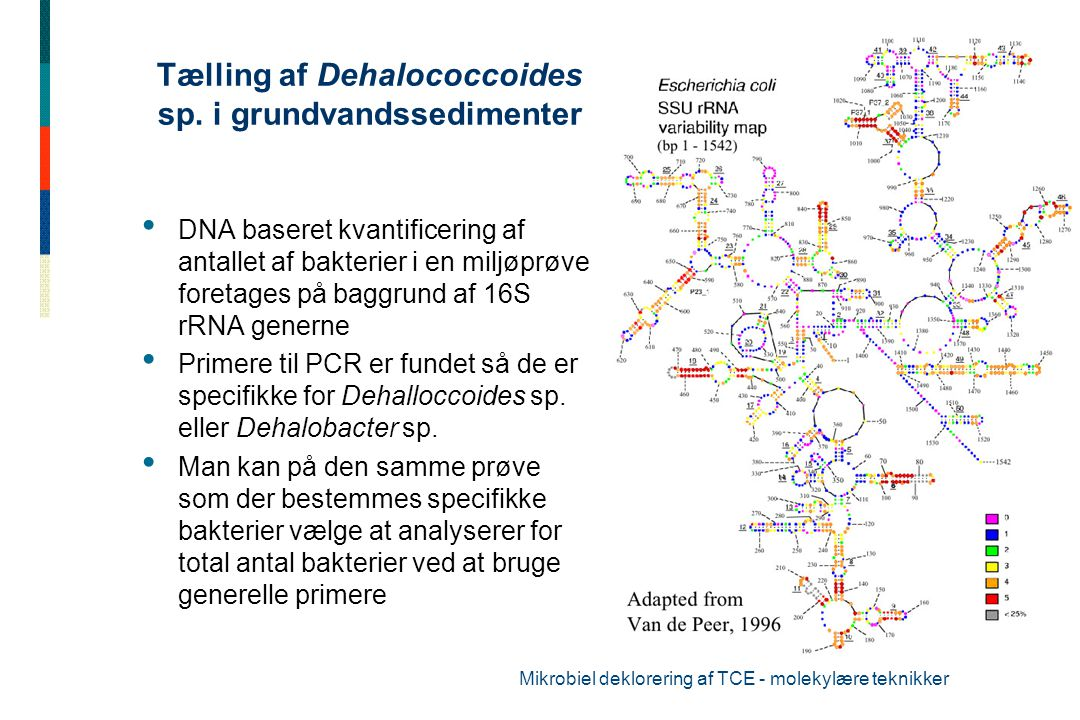 Tælling af Dehalococcoides sp. i grundvandssedimenter