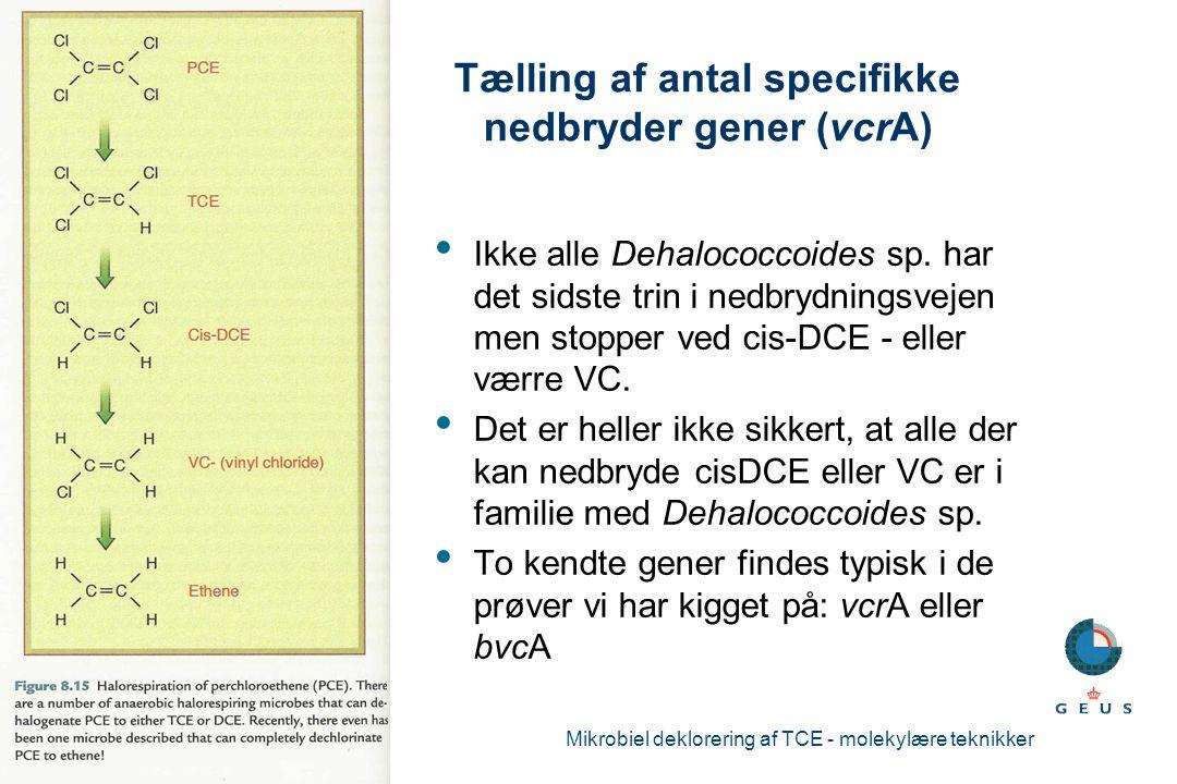 Tælling af antal specifikke nedbryder gener (vcrA)