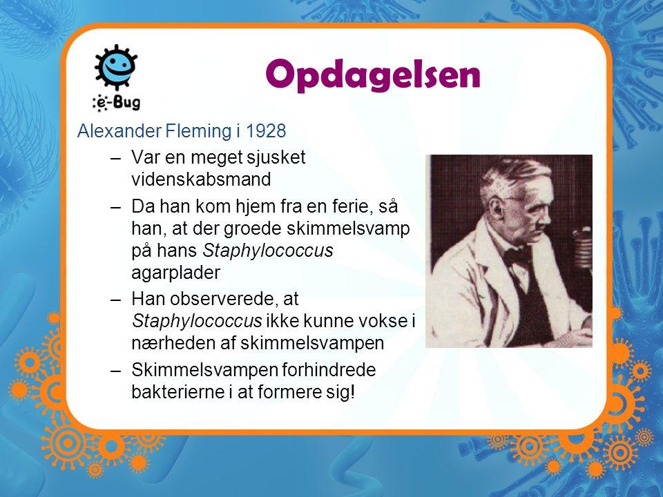 Opdagelsen Alexander Fleming i 1928