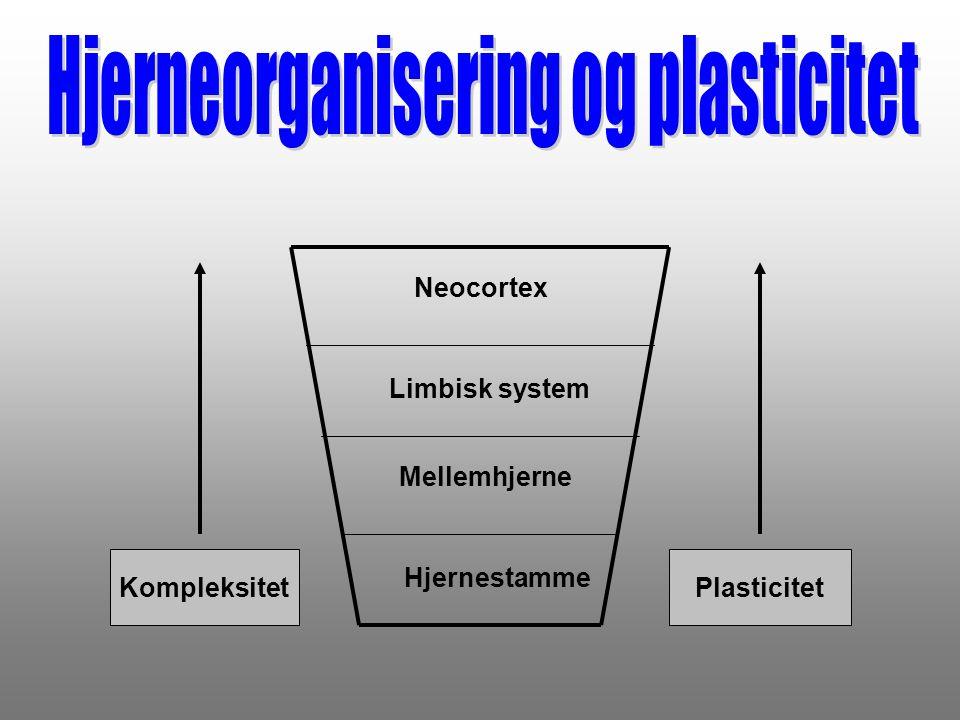 Hjerneorganisering og plasticitet
