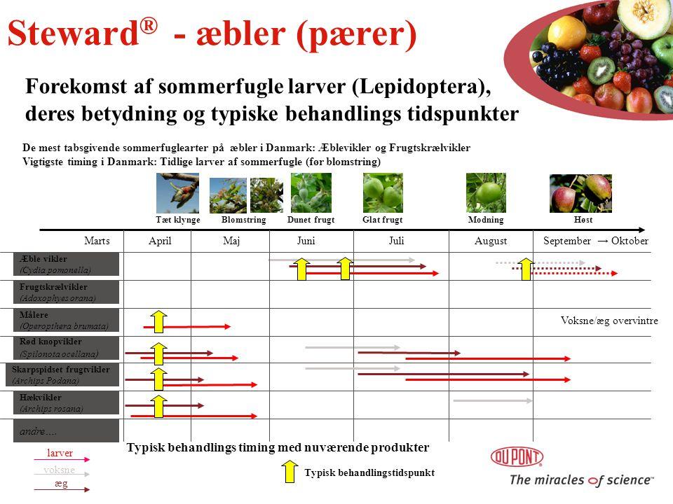 Steward® - æbler (pærer)