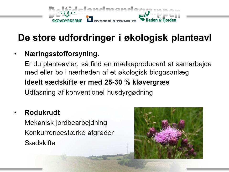 De store udfordringer i økologisk planteavl