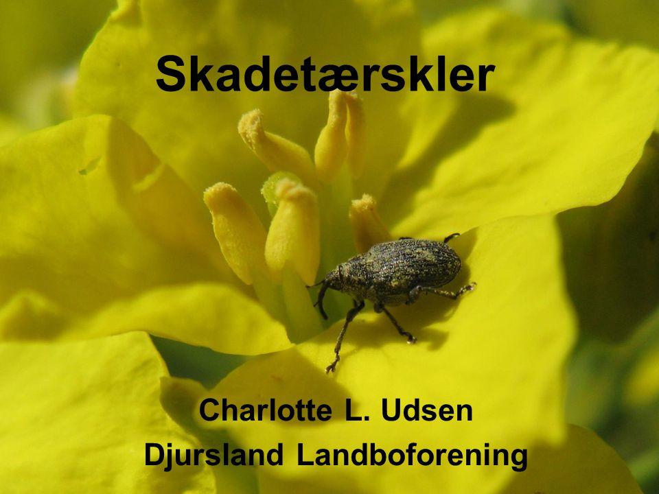 Djursland Landboforening