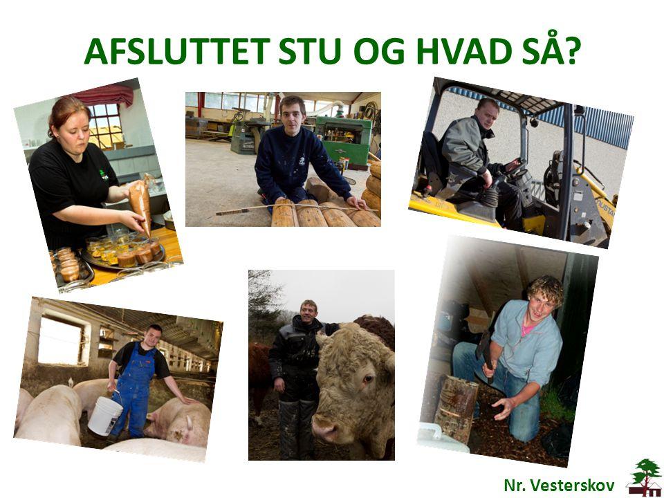 AFSLUTTET STU OG HVAD SÅ