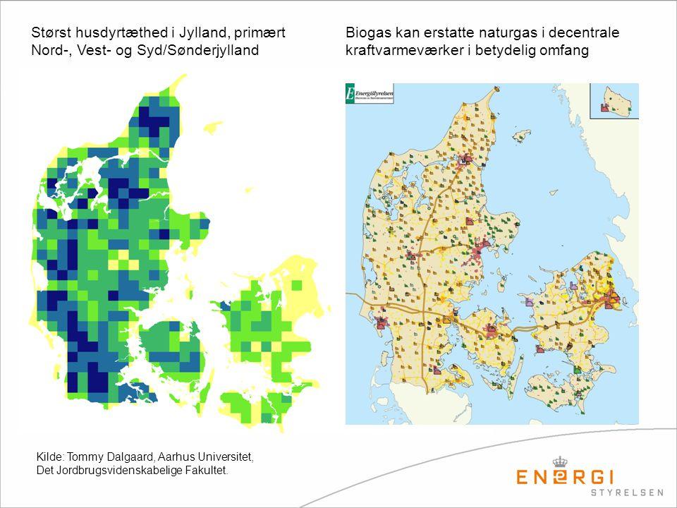 Størst husdyrtæthed i Jylland, primært Nord-, Vest- og Syd/Sønderjylland