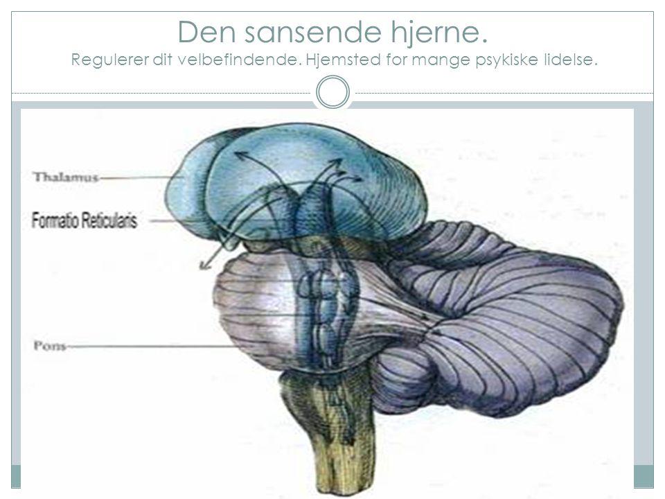 Temperaturregulering i hjernen