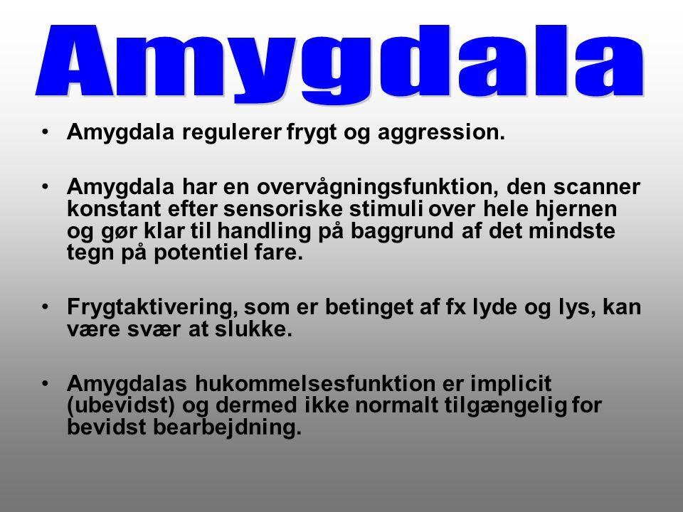 Amygdala Amygdala regulerer frygt og aggression.
