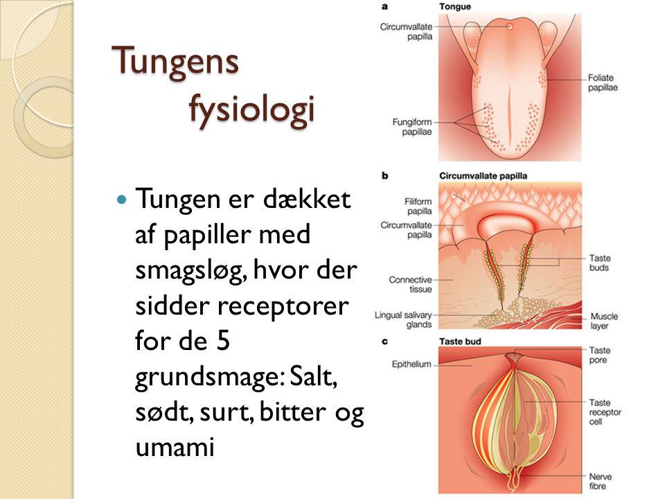 Tungens fysiologi