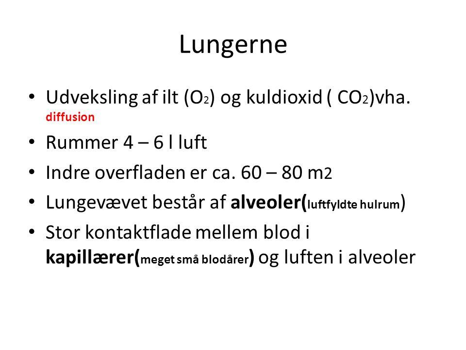 Lungerne Udveksling af ilt (O2) og kuldioxid ( CO2)vha. diffusion