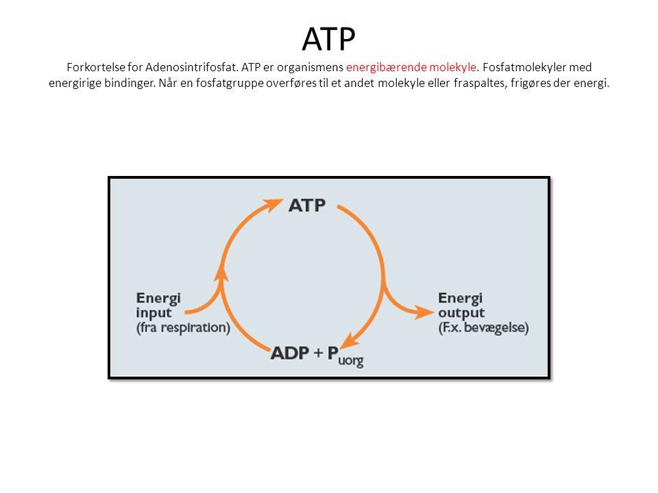 ATP Forkortelse for Adenosintrifosfat