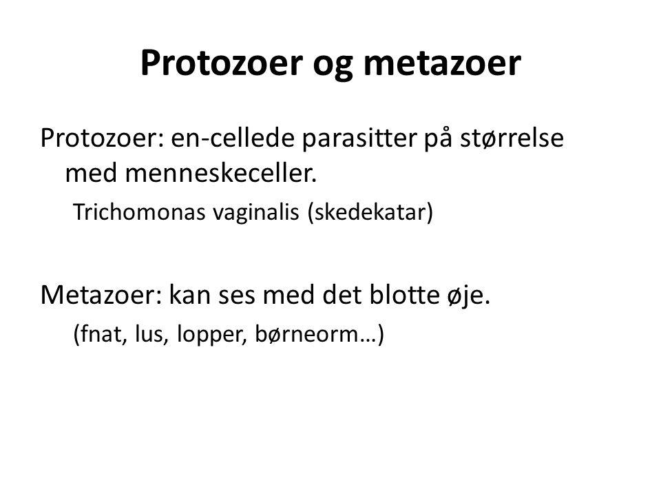 Protozoer og metazoer Protozoer: en-cellede parasitter på størrelse med menneskeceller. Trichomonas vaginalis (skedekatar)