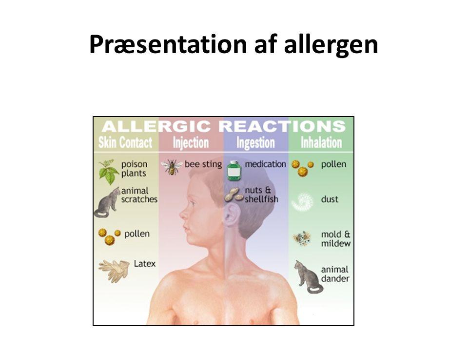 Præsentation af allergen