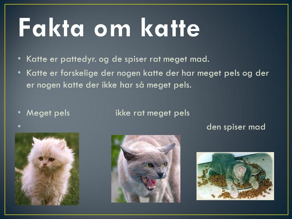 Fakta om katte Katte er pattedyr. og de spiser rat meget mad.